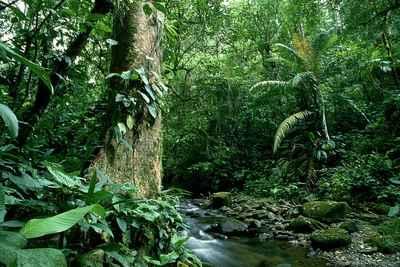 Kandung 50 Juta Barel Minyak, BOB Incar Kawasan Konservasi Hutan