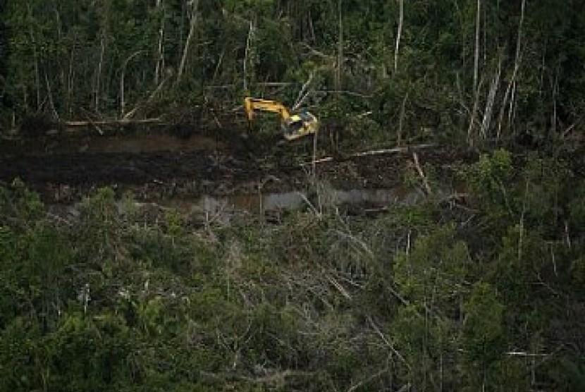 Cara Baru Jaga Hutan dengan Sistem Adopsi Pohon