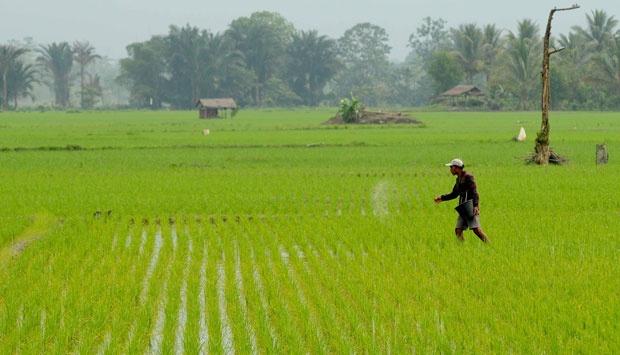 Pengembangan Sektor Pertanian Sumut Belum Merata