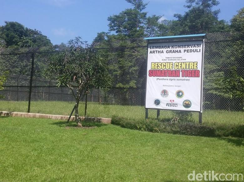 Konservasi Harimau Sumatera di TWNC