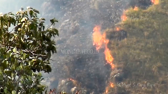 Ratusan Hektar Kawasan Hutan Di Desa Sibolangit Hangus Terbakar