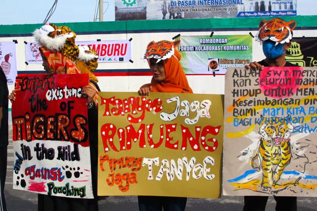 Gugah Kepedulian Bersama Selamatkan Harimau Sumatera