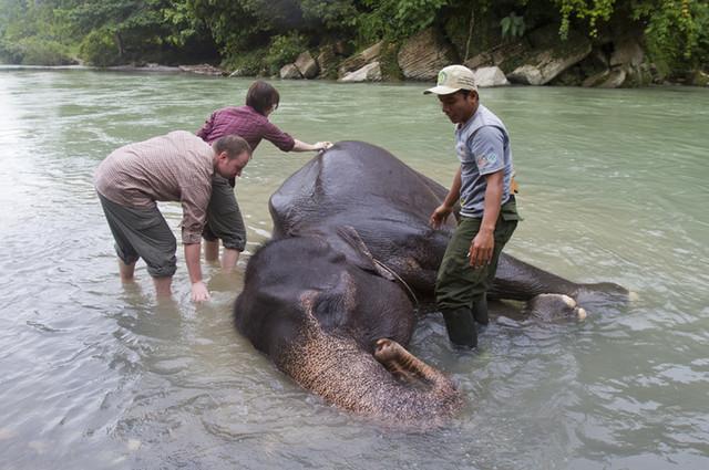 Studi Untuk Hitung Populasi Hingga Forensik Gajah