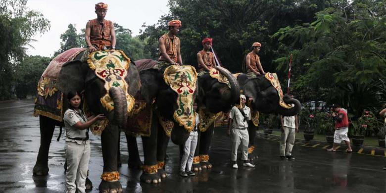 Gajah Sumatera Ikut Upacara HUT RI di Bali