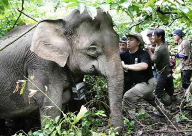 Gajah Kembali Mengamuk di Aceh Timur