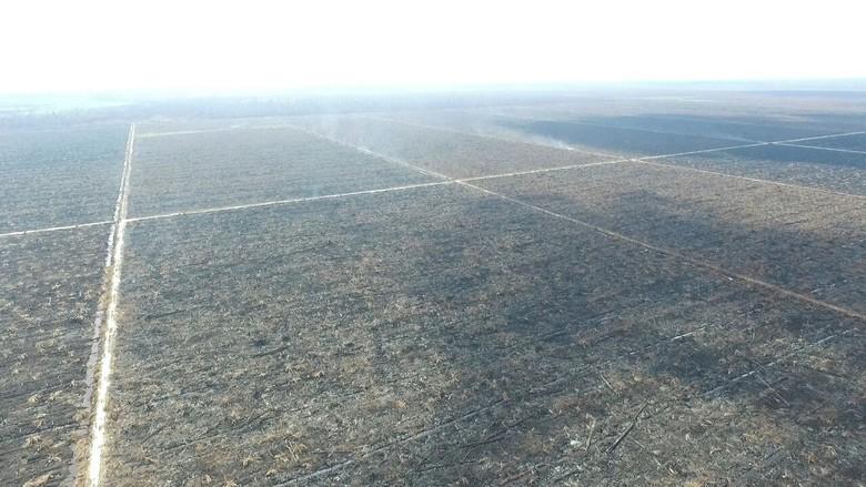 Tim KLHK Disandera Saat Investigasi Kebakaran Hutan di Riau