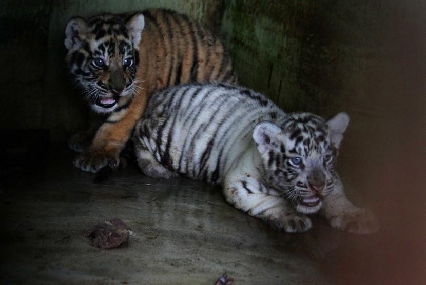 Mahasiswa Diminta Dukung Konservasi Harimau