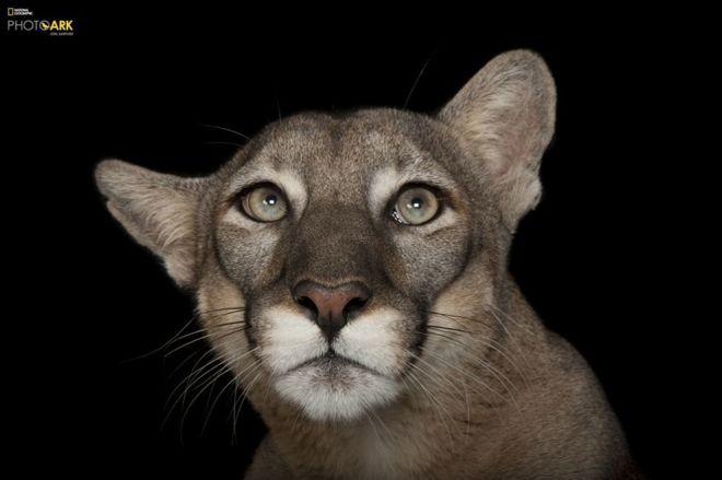 Joel Sartore: Pria Yang Membuat Studio Foto Untuk Binatang Yang Terancam Punah
