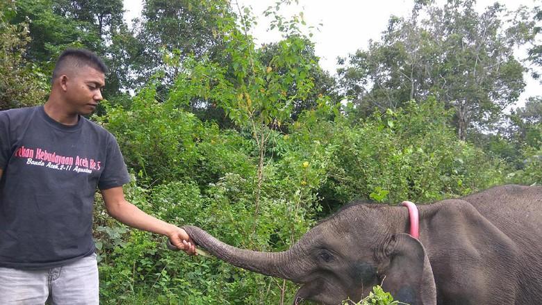 Cerita Jamal, 20 Tahun Melatih Gajah