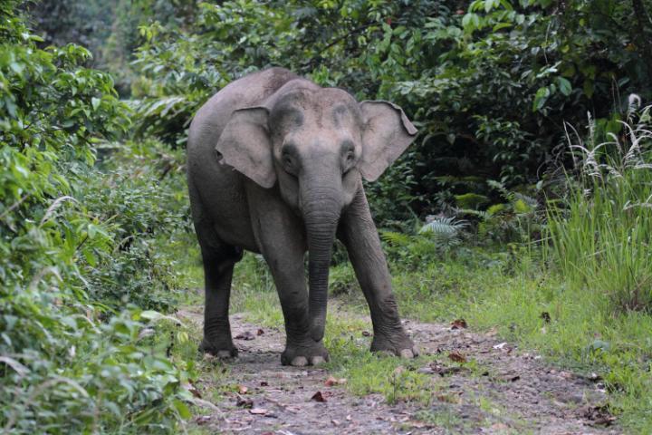 Sensasi Liburan Ditemani Gajah di Tangkahan Sumatera Utara