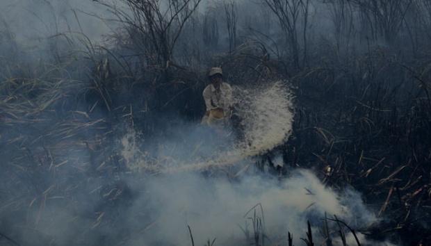 Jokowi Minta Angka Kebakaran Hutan Ditekan