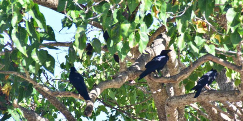 Pulau Flores, Tempat Terbaik Mengamati Burung
