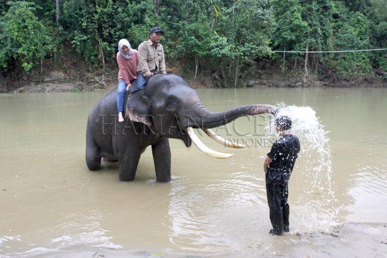 Ekowisata Gajah dan Air Terjun Mini Sarah Deue