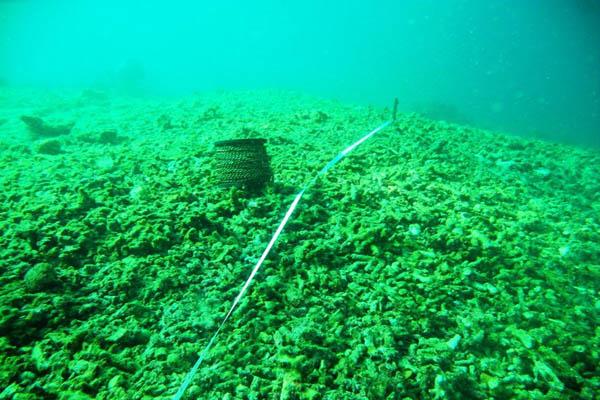 30 Tahun Konservasi di Laut, Tapi Kenapa Ancaman Kerusakan Ekosistem Semakin Tinggi ?