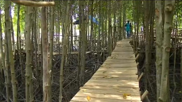 Ekowisata Mangrove, Lubuk Kertang Langkat