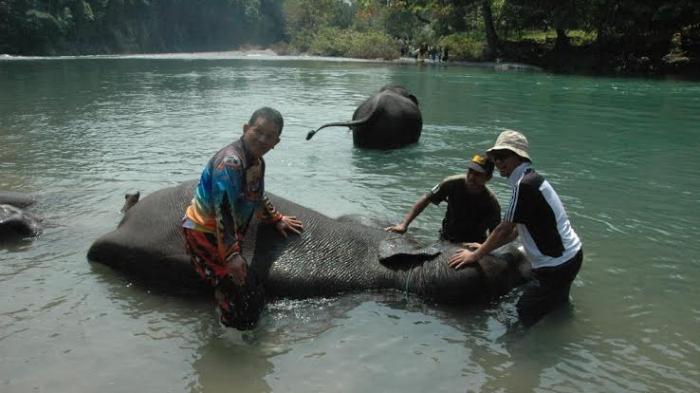 Menikmati Suasana Hutan Sambil Memandikan Gajah Sumatera di Tangkahan
