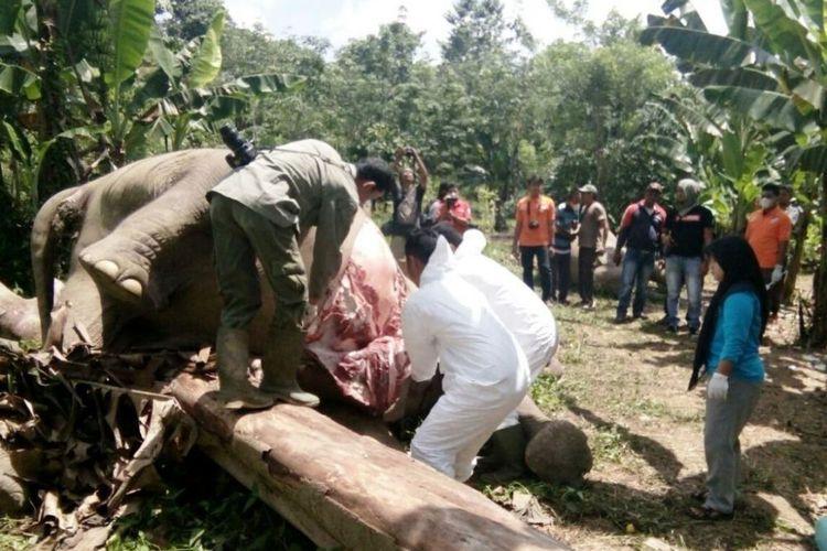 BKSDA Duga 2 Gajah yang Tewas Terkena Racun