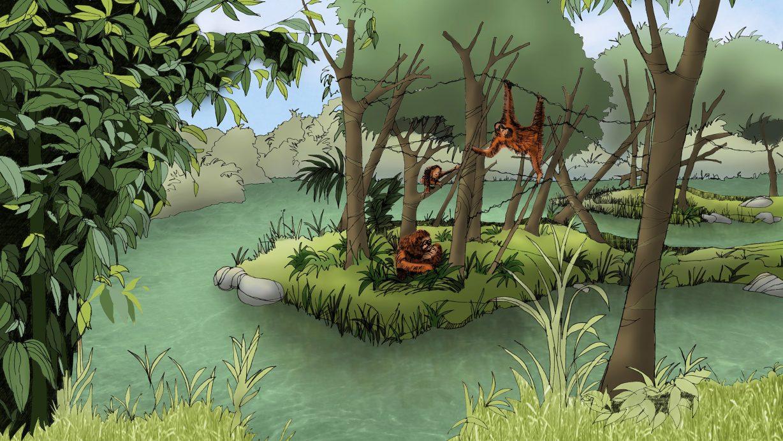 Pulau Haven, Pulau Buatan Untuk Orangutan yang Tidak Bisa Dilepasliarkan