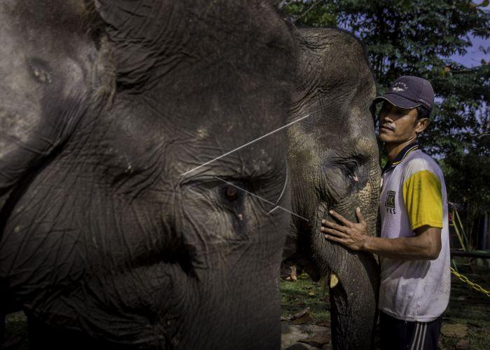 Potret : Lebih Dekat Dengan Konservasi Gajah Riau