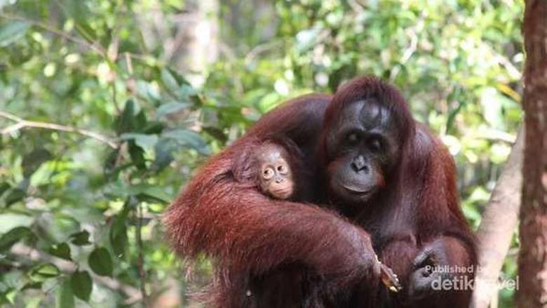 Yuk Mampir ke 6 Taman Nasional Ini, Bikin Kamu Lebih Peduli Alam !