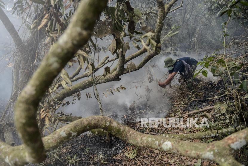 Karhutla 2019 Hanguskan 86 Ribu Hektare Lahan Gambut