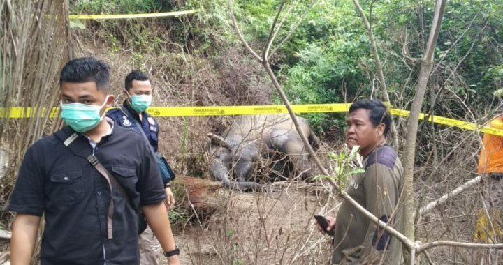 Jejak Panjang Konflik Manusia-Satwa di Sumatera