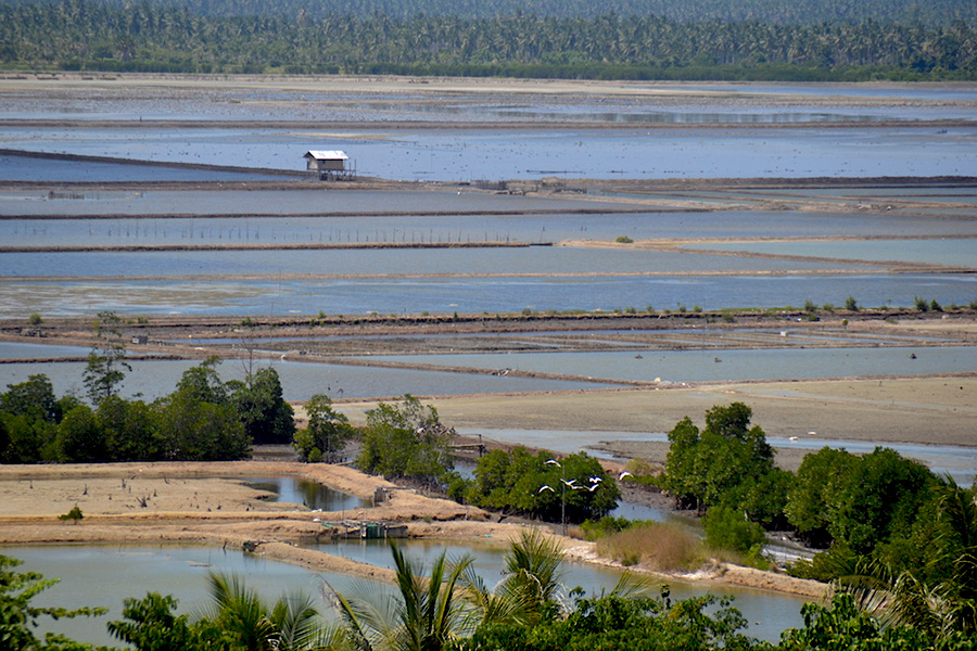 Hutan mangrove di pesisir Teluk Tomini yang berada di kawasan Cagar Alam Tanjung Panjang di Kabupaten Pohuwato, Gorontalo terancam tambak udang dan bandeng. Foto: Christopel Paino/Mongabay Indonesia