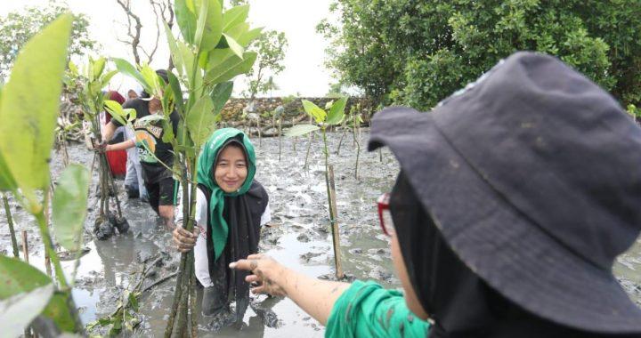Ini Upaya Bersama Rehabilitasi Mangrove dalam Meredam Dampak Perubahan Iklim