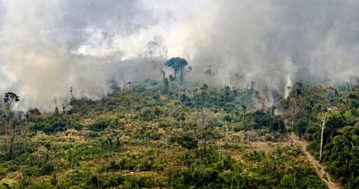 Studi Ungkap Manusia Hancurkan Dua pertiga Hutan Hujan Tropis di Dunia