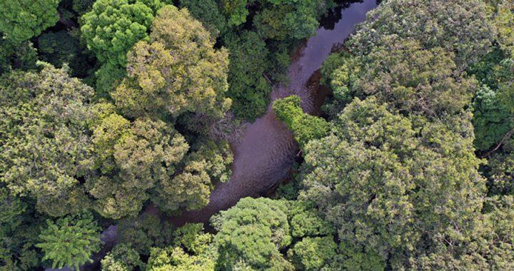 Hari Hutan Internasional: Merawat Hutan sebagai Sumber Kehidupan Manusia