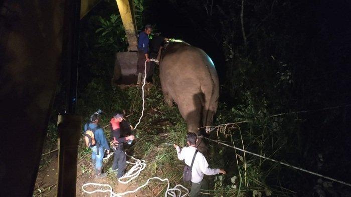 Tim gabungan mempersiapkan penggiringan satu ekor gajah liar menggunakan mobil Beko di Kampung Negeri Antara, Kecamatan Pintu Rime Gayo, Bener Meriah, Sabtu (20/3/2021) dini hari. For Serambinews.com
