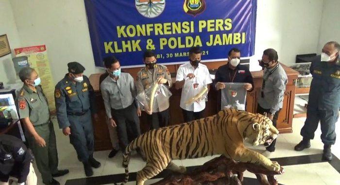 Polisi-KLHK Tangkap 3 Penjual Awetan Harimau-Gading Gajah di Jambi