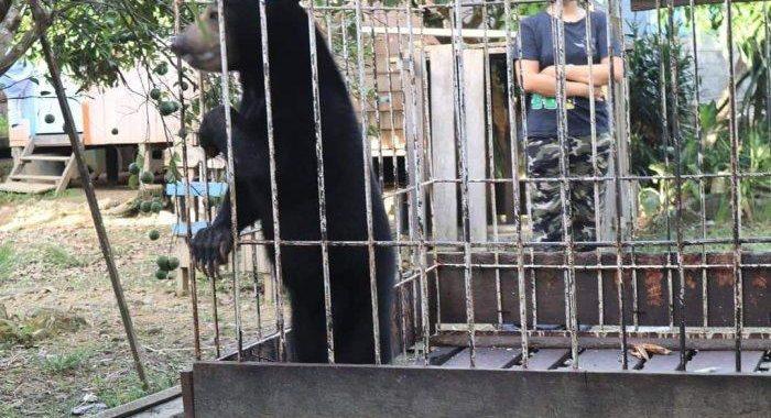 Upaya Konservasi Satwa yang Dilindungi, Balai TNKM Malinau Kembalikan Satwa Liar ke Habitat Asal