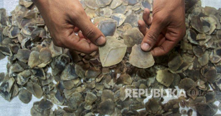 Dua Pelaku Penjual Sisik Trenggiling Ditangkap di Pasaman