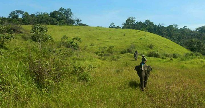 Hutan Koridor Gajah Itu Terancam Perambahan