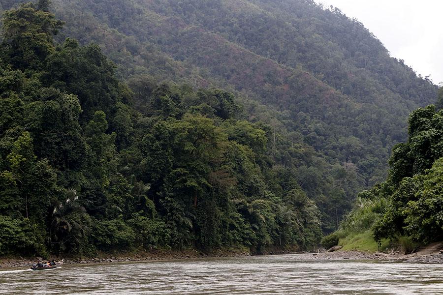 Hutan di sisi kiri dan kanan Sungai Alas-Singkil sungguh indah dan alami. Foto: Junaidi Hanafiah/Mongabay Indonesia