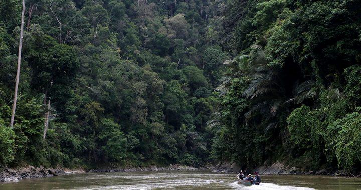 Foto: Indahnya Hutan Leuser dari Sungai Alas-Singkil