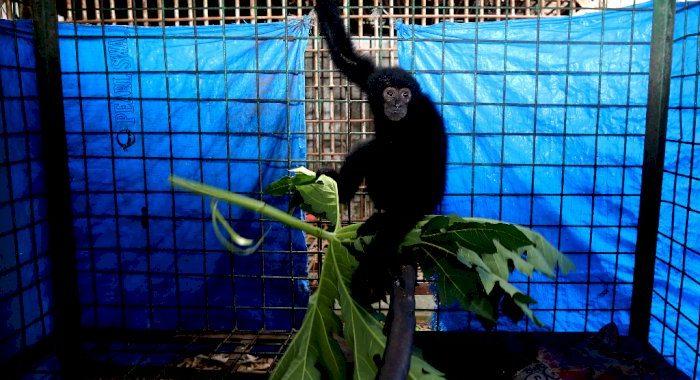FOTO: Rehabilitasi Satwa Dilindungi Serahan Warga