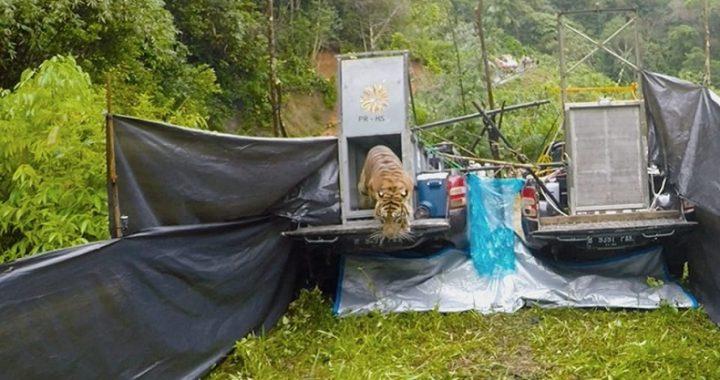 Rawan Konflik dengan Hewan, Pemkab Agam Diminta Buat Perda Satwa
