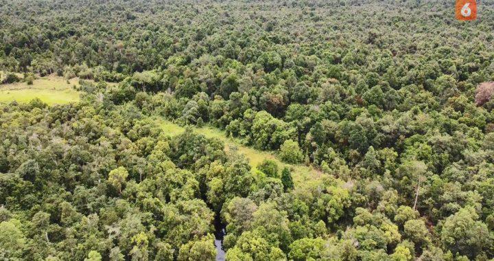 Ubah Jadi Hutan Desa, Cara Warga Kutai Kartanegara Selamatkan Hutan
