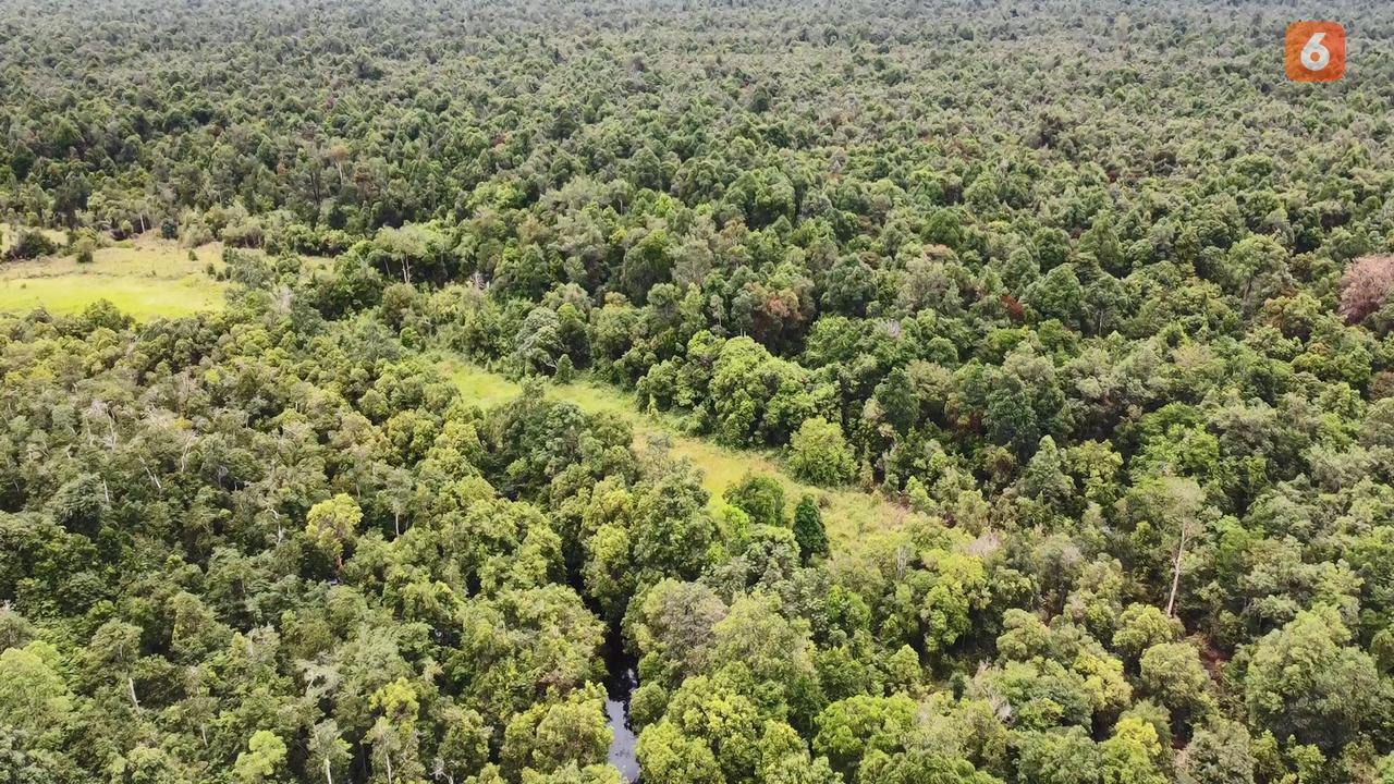 Hutan desa di Desa Genting Tanah di Kabupaten Kutai Kartanegara ini merupakan hutan gambut. (foto: Abdul Jalil)