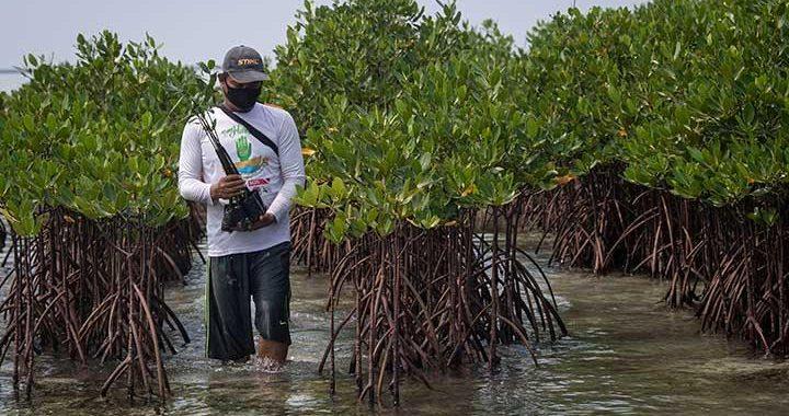 5 Manfaat Penting Keberadaan Hutan Mangrove
