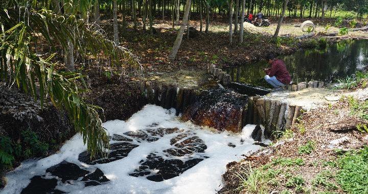 Berbagai Tantangan dalam Pemulihan Ekosistem Gambut di Area Konsesi