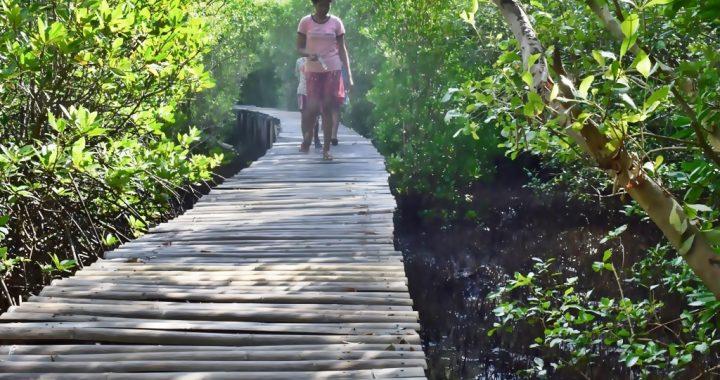 Hutan Mangrove Mageloo, Perjuangan Peraih Kalpataru Menghutankan Pesisir Pantai