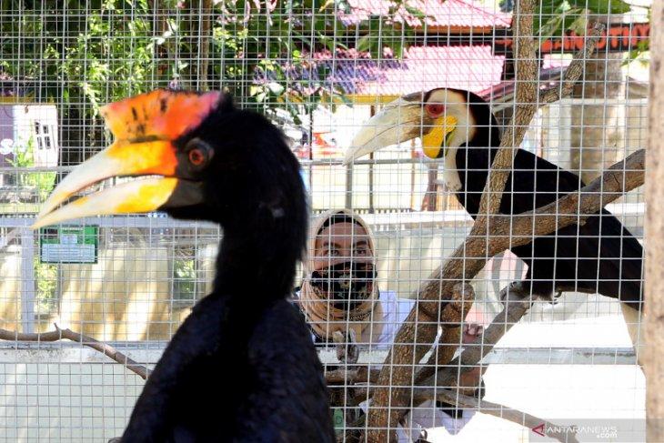 Ilustrasi: Petugas Balai Konservasi Sumber Daya Alam (BKSDA) Aceh Taing Lubis memeriksa kondisi kesehatan burung rangkong dan hewan langka koleksi Taman Rusa, Aceh Besar, Aceh, Kamis (17/6/2021) ANTARA FOTO/Irwansyah Putra/rwa. (ANTARA FOTO/IRWANSYAH PUTRA)