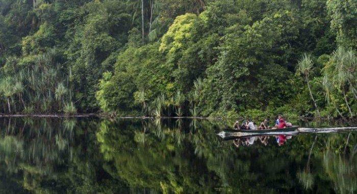 Taman Nasional Berbak Menjadi Rumah Aman Bagi Ratusan Jenis Satwa Endemik