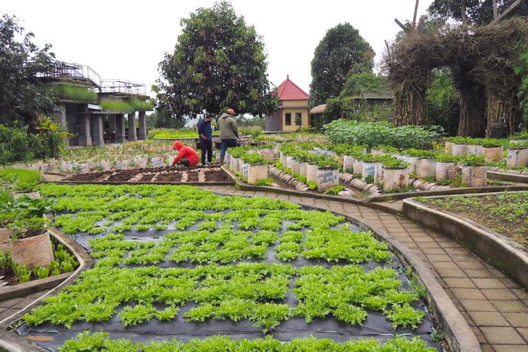 Perkebunan organik untuk edukasi di Kampung Bingo, Bedugul. Foto: Anton Muhajir/Mongabay Indonesia