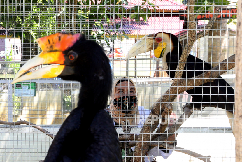 Petugas memeriksa kondisi kesehatan burung rangkong yang merupakan hewan dilindungi Foto: ANTARA /Irwansyah Putra