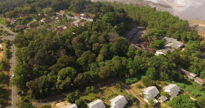 Hutan Kota Muntok di Bangka Barat, Tempat Penelitian Karbon hingga Pelestarian Flora dan Fauna Langka