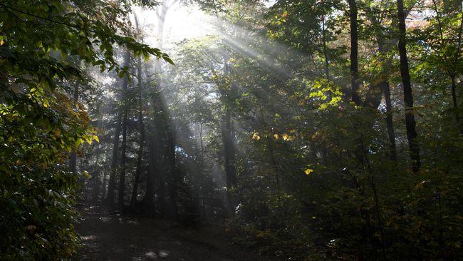 Hutan 'Paru-paru Kedua Dunia' Masuk Daftar Warisan UNESCO